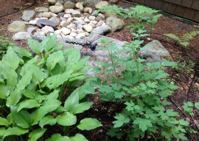Garden & Landscape Maintenance